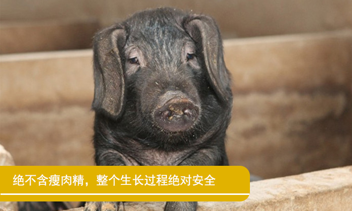 皖南有机黑毛猪猪脚500g